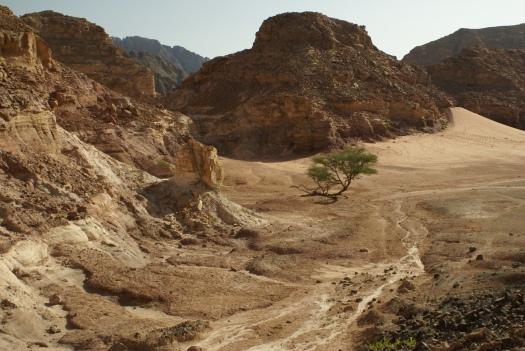 The Sinai Peninsula